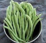 Organic Ideal Market Bean