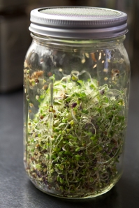 sprouted seed