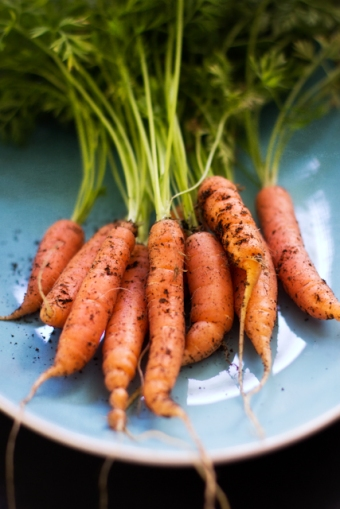 Little Finger Carrots