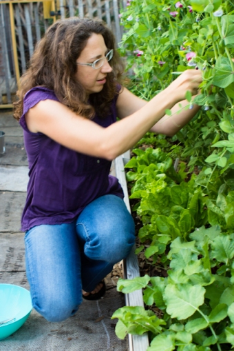 Chandra picking peas